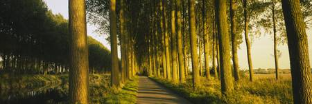 Tree Lined Path Brugge Belgium