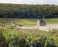 Stone wall dividing vineyards