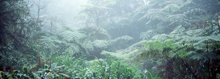 Tropical Rain Forest Waimea HI