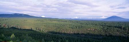 Deschutes National Forest OR