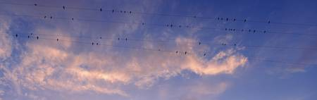 Low angle view of birds perching on wires
