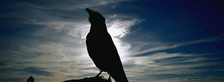 Silhouette of a raven at dusk