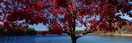 Walden Pond Concord MA Fall color