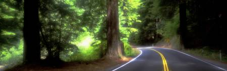 Road Redwoods Mendocino County California