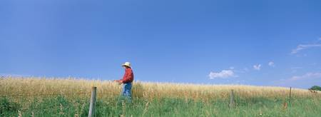 Farmer standing in an oat field
