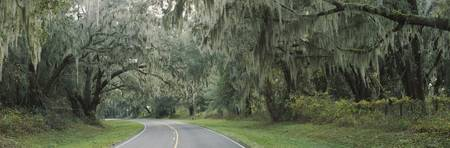 Oak trees on both sides of a road
