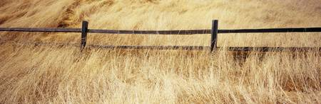 Wooden fence in the dry grass