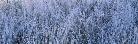 Frost on grass in a field