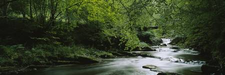 River flowing in the forest