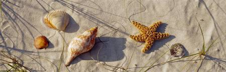 Close-up of a starfish and seashells on the beach