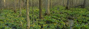 Trees among yellow flowers in the forest