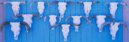 Cattle skulls on wooden planks