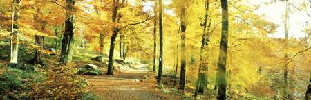 Autumn Forest Germany