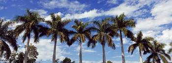 Low angle view of palm trees Florida