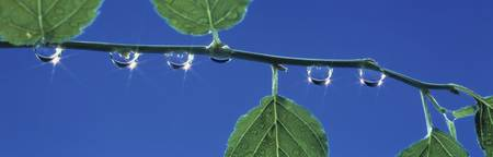 Leaves and dewdrops