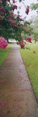 Residential Sidewalk with Flowers
