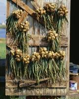Onions hanging on a barn door