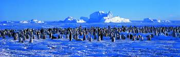 Penguins Wedell Sea Antarctica