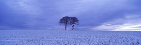 Twin trees in a snow covered landscape Warter Wol