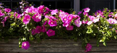 Flowers in a window box