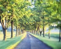 Tree Lined Drive Lancaster County PA