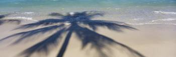 High angle view of shadow of a tree on the beach