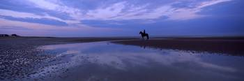 Silhouette of a horse with rider on the beach at