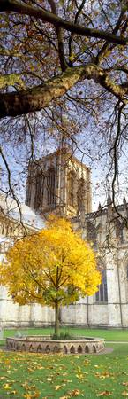 Cathedral in autumn York Minster York North Yorks