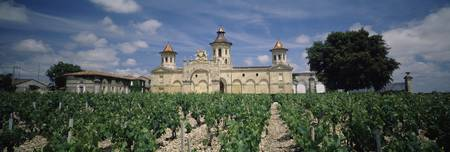 Vineyard in front of a castle