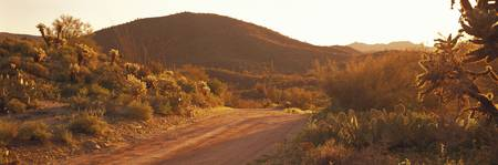 Dirt Road Cottonwood Canyon AZ