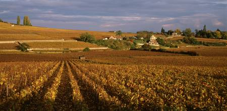 Vineyards in Bourgogne France