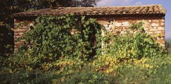 Old Stonehouse w/Vine Provence France