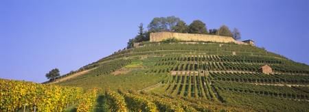 Vineyards on a hill