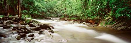 Little River Cades Cove Great Smoky Mountains TN