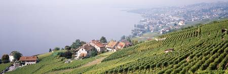 Vineyards Lausanne Lake Geneva Switzerland