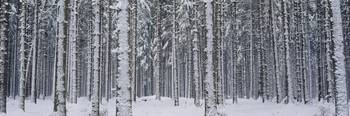 Trees Winter Austria