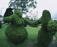 Topiary in a garden with a church in the backgrou