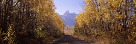 Road passing through a forest Grand Teton Nationa
