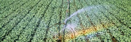 Irrigation Broccoli Crop OR