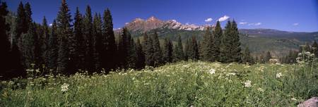 Forest Kebler Pass Crested Butte Gunnison County