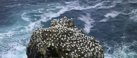 Flock of birds perching on a cliff