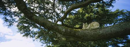 Low angle view of a statue of the Cheshire Cat on
