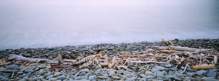Close-up of logging debris and pebbles at the coa