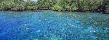 High angle view of a group of people snorkeling