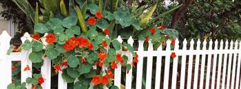 Flowers over a picket fence Naples Long Beach Cal