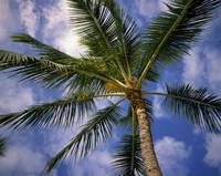 Low-angle view of palm tree fronds
