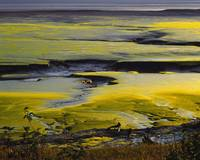 Golden vegetation on tidal flats