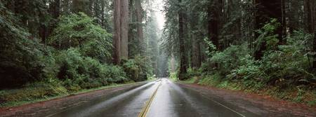 Road passing through forest Avenue Of The Giants