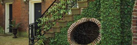 Ivy plant covering a brick wall and the railing o