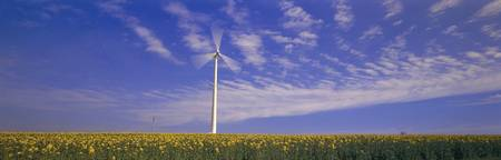 Wind Turbine Rape Flowers Germany